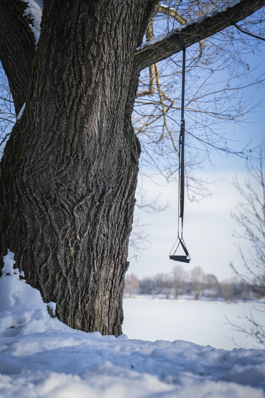 Sling Trainer hängt am Baum